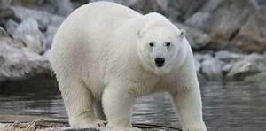 Los 10 animales que más muertes causan en el mundo Informacion es
