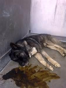 Baldwin Park Animal Shelter Dogs