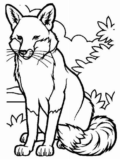 Fox Coloring Pages Printable Animals Animal