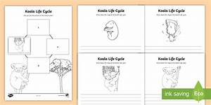 Koala Life Cycle Worksheet    Worksheets