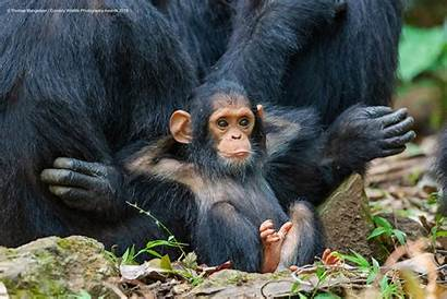 Comedy Wildlife Awards Funniest Animals Meet Funny