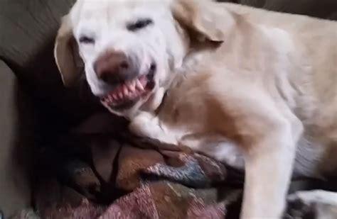 denver  guilty dog strikes   time ruining