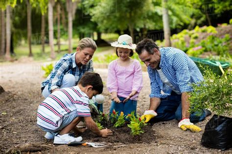 Happy Family Gardening Together In Garden  Stock Photo