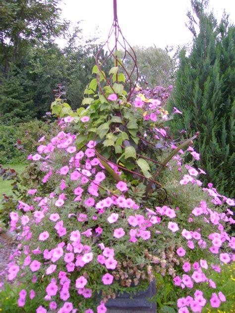 Grow Up! Ideas For Climbing Plants  Yard Ideas Blog