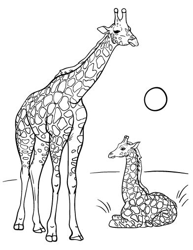 giraffe coloring pages  animals  gianfredanet