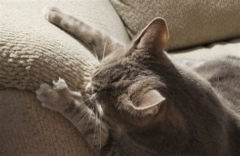 cat clawing furniture why do cats claw furniture 2015