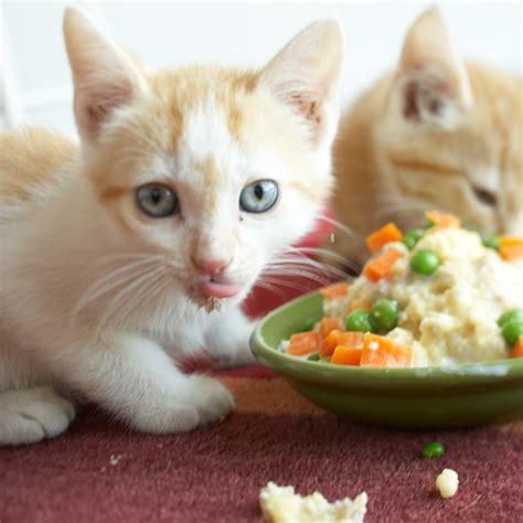 organic dog food  cat food    pet
