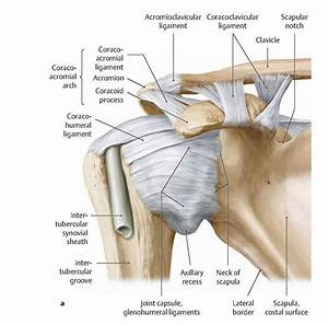 Causes of Frozen Shoulder Syndrome | Physical Therapy ...