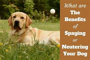 why spay or neuter your dog