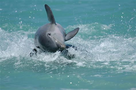 The Smart Way To View Wild Dolphins Mission Blue