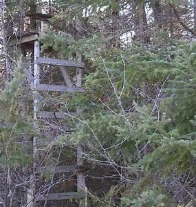 Ladder Deer Stand Plans