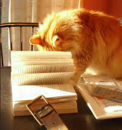 cat books file cat with book 2320356661 jpg wikimedia commons