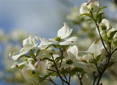 Die 7 Musthave Frühlingsblüher Für Ihren Garten Eden