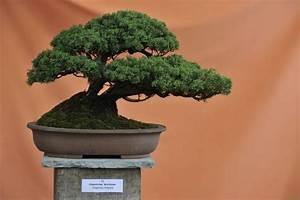 Chinesischer Wacholder Bonsai : bonsai galerie bonsai arbeitskreis steinfurt ~ Sanjose-hotels-ca.com Haus und Dekorationen