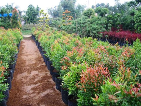 philippines landscape plants the flower plant by wtu philippines plant rentals landscape design and implementation flower
