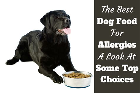 hypoallergenic dogs list  food common puppy