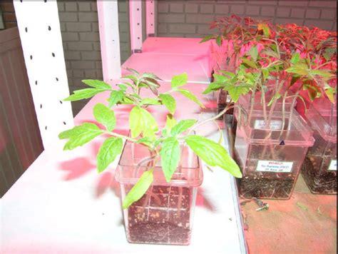 cheap grow lights sunlight fluorescent grow lights cheap on winlights