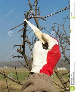 Protection Arbres Fruitiers : protection de ressort d 39 arbre fruitier images stock ~ Premium-room.com Idées de Décoration