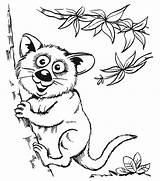 Coloring Pages Opossums Animal Mammals sketch template