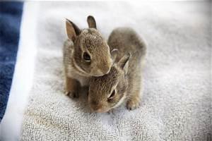 30 Extremely adorable baby animals (30 pics) | Amazing ...