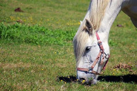 horse feeds horses