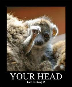Funny Pictures ... Cute Lemur Quotes