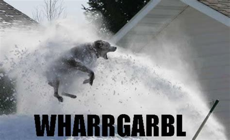 Dog Sprinkler Meme - image 32938 wharrgarbl sprinkler dog know your meme