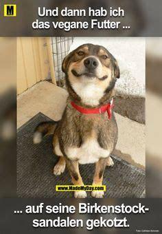 die  besten bilder von witzige tierbilder