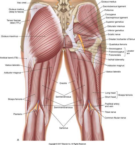 Intramuscular Tendon Strains in Hamstrings and Quadriceps