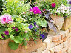 Balkonpflanzen Winterfest Machen : balkonpflanzen bei starker sonne pflegen 6 tipps ~ Watch28wear.com Haus und Dekorationen