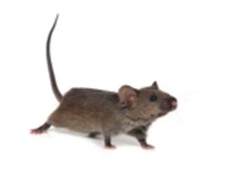 Biozide, Schädlingsbekämpfung, Rattengift, Rattenköder