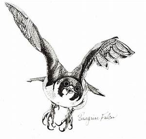 Flying Falcon Drawing | www.pixshark.com - Images ...