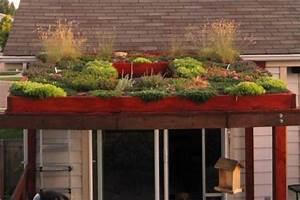 Green Roof Benefits   Horticulture and Home Pest News