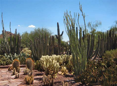 Desert Botanical Garden - travel guide at wikivoyage