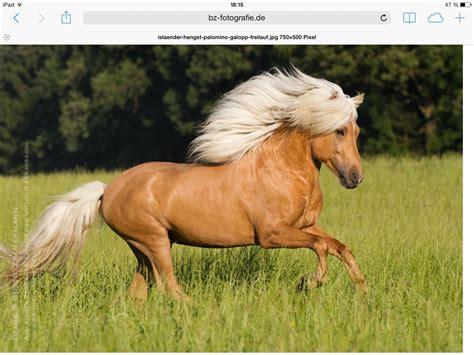 pferde wie viel weisst du ueber sie