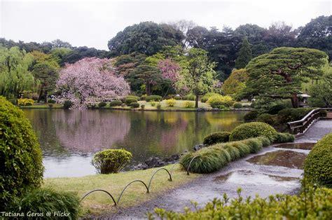 Japan Cherry Blossom Wallpaper Rain In Shinjuku Gyoen National Garden There Are Fallen Ch Flickr