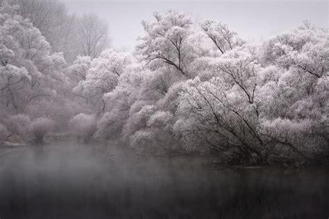 hauntingly beautiful frosty winter trees