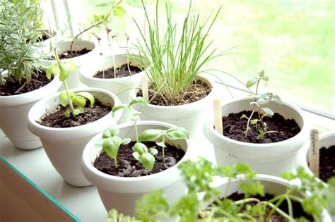 Herb Garden Indoor : Grow Your Own Indoor Herb Garden At The Apartments At