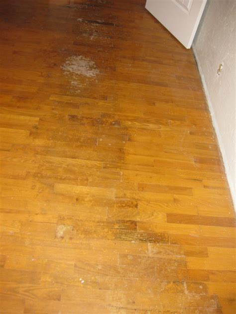 How to Varnish a Wooden Floor?   Wood Finishes Direct