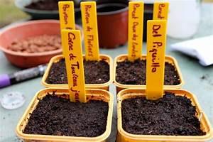 Faire Germer Des Graines De Poivrons : comment semer des piments et des poivrons quand et comment r ussir ses semis ~ Melissatoandfro.com Idées de Décoration