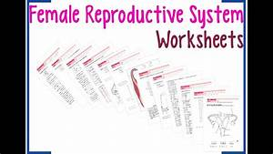 Female Reproductive System Worksheets
