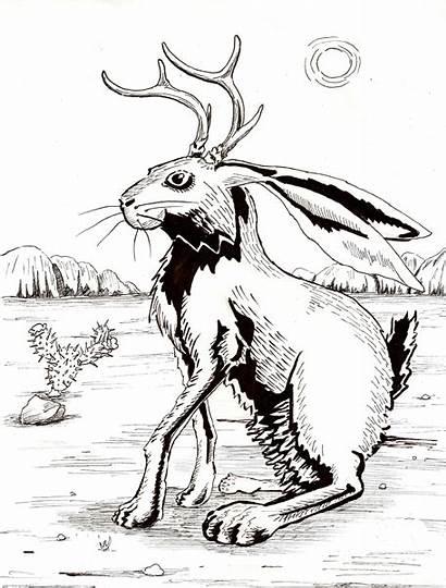 Jackalope Coloring Pages Cryptozoology Jackalopes Rabbit Colouring