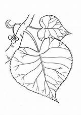 Bark Coloring Pages Template Templates sketch template