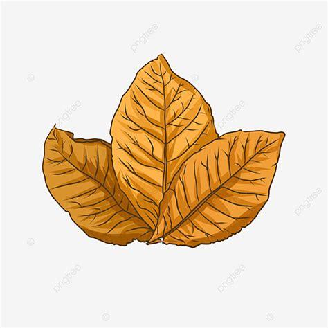 tobacco leaf png vector psd  clipart  transparent background    pngtree