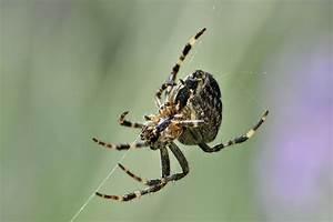spinnen vertreiben bekampfen hausmittel gegen spinnen With französischer balkon mit mittel gegen mäuse im garten