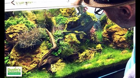 Planted Aquarium Aquascaping by Amazing Planted Aquariums Aquarium Design