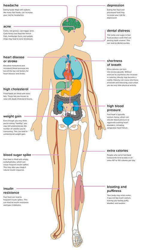 effects  fast food   body