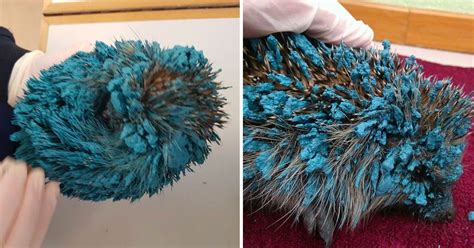Real Life Sonic The Hedgehog Needs To Be Saved