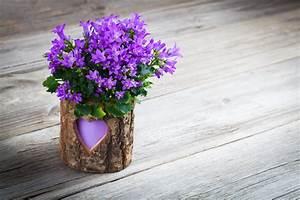 Alles Für Den Balkon : glockenblumen auf dem balkon kultivieren pflegetipps ~ Bigdaddyawards.com Haus und Dekorationen