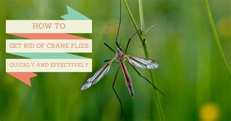How To Get Rid Of Flies On Porch. How To Get Rid Of Crane